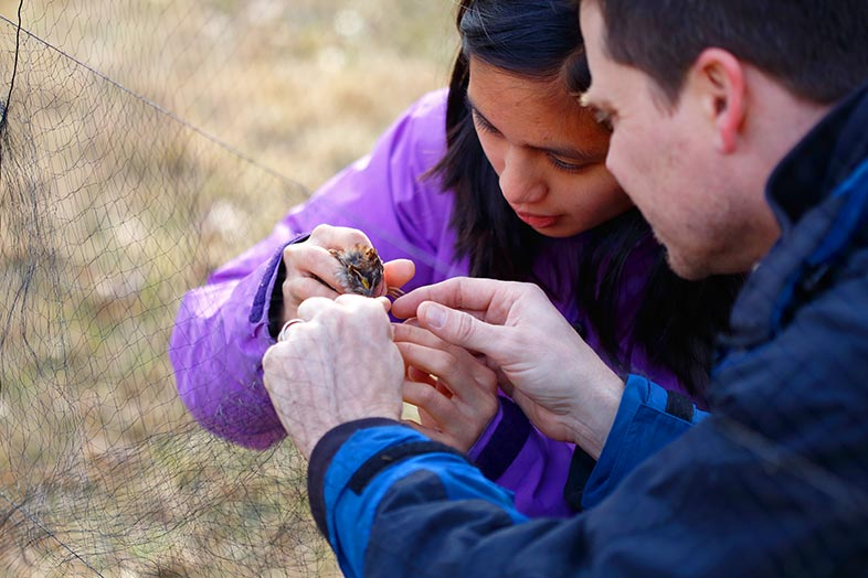 Lia Bobay and a colleague examine a bird.